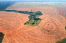 La déforestation dans le monde