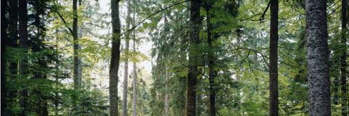 Le bois, en voie d'extinction ou alternative au pétrole ?