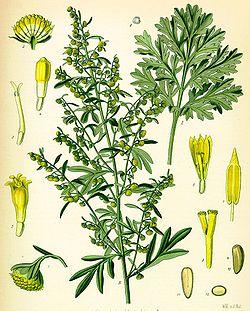 Des vertus des plantes par Macer Floridus, 1832 250px-Koeh-164