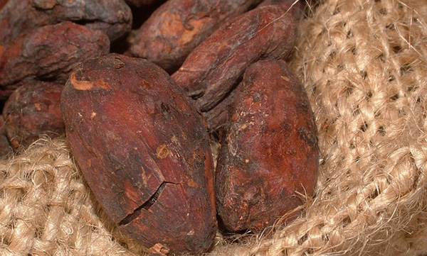 feves-cacao-chocolat-01
