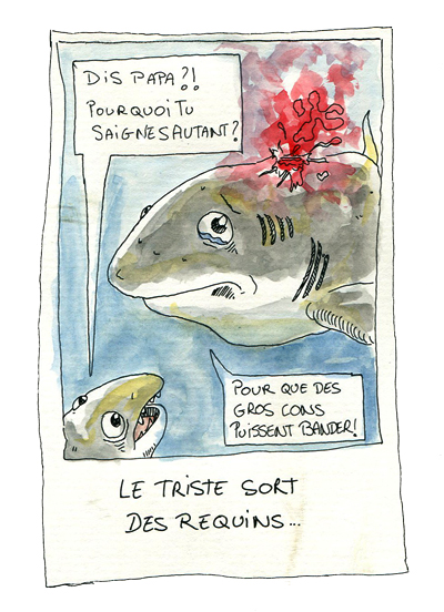 chasse au requin