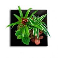 plantes dépolluantes cadre vegetal