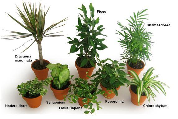 Entretien plante d interieur