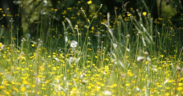 techniques contre les allergies pollen Allergie-au-pollen-symptomes-solutions-naturelles-plante-03