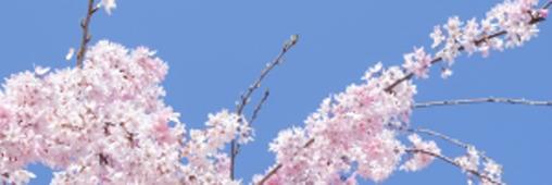 Astuces pour un nettoyage de printemps..écolo!