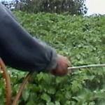 Pesticides: l'INVS fait le point...