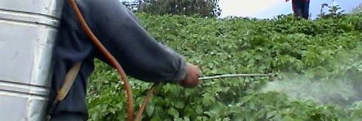 Pesticides. Fruits et légumes les plus et moins pollués