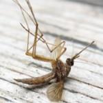 Que valent les bougies pour éloigner mouches et moustiques ?