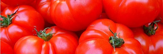 Tomate : l'incontournable fruit de l'été