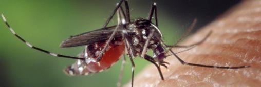 Tous les répulsifs anti-moustique