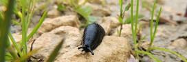 Jardiner bio contre les limaces