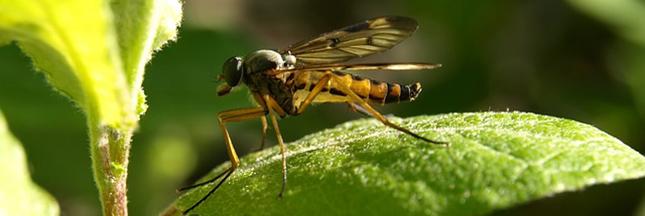 contre-les-moustiques-plante-insecte
