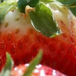 Beautyfry : des fruits abîmés pour créer des crèmes de beauté