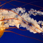 Piqûre de méduse : risques et solutions