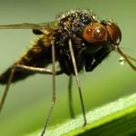 Eviter l'eau qui dort pour éviter les moustiques