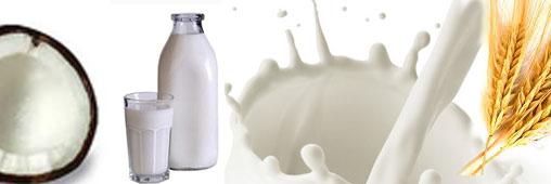 Laits végétaux : alternatives aux laits animaux