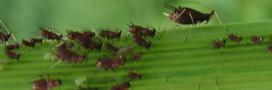 Insecticide, le DDT est impliqué dans Alzheimer
