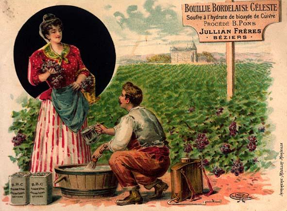 bouillie-bordelaise1