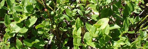 Des plantes pour rafraîchir l'air de la maison