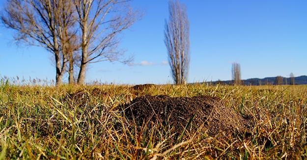 astuces-naturelles-contre-les-taupes-jardin-bio-02