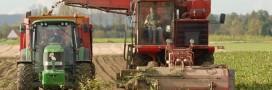 La chicorée française en route vers l'agriculture durable