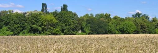 Rhône-Alpes, première région d'agriculture BIO