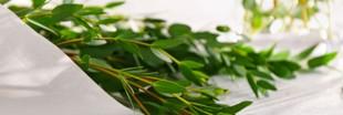 Maux de gorge? Optez pour l'eucalyptus!