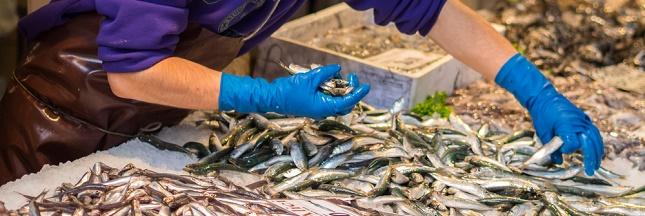Quelles espèces de poissons acheter ?