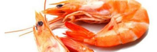 """Les crevettes, """"poissons"""" que l'on peut acheter"""