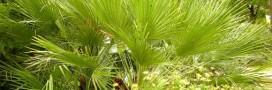 Le xéropaysagisme ou le jardinage sans eau