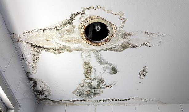 astuce anti-moisissure maison