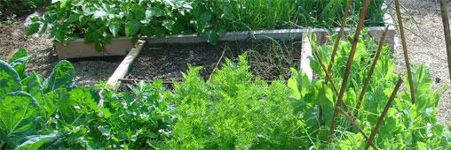 Jardins partagés : un outil pédagogique surprenant