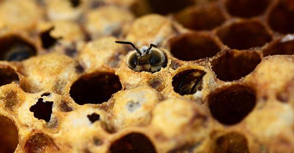 miel-abeilles-fleurs-07