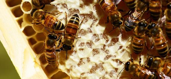 miel-abeilles-fleurs-08