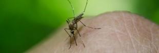 Astuces anti-moustiques: les fiches pratiques