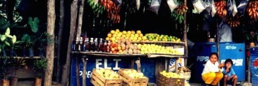 Tourisme Vert. Des voyages sur-mesures dédiés aux Végétariens