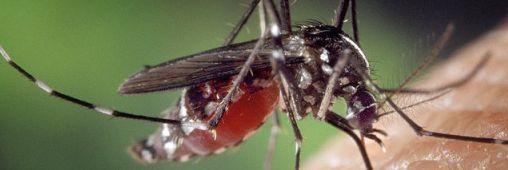 Idée reçue. Sans anti-moustique, impossible de se débarrasser des moustiques