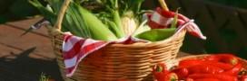 Que faire du surplus de récolte?
