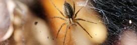 Trucs et Astuces. Lutter contre les araignées chez vous