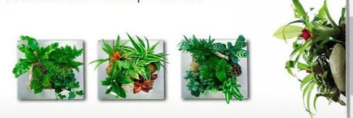 cadres-vegetaux.jpg