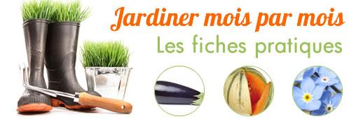 Jardiner en mars : la fiche pratique
