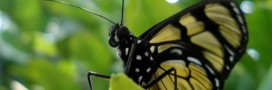 Science participative: un programme complet pour curieux de toutes natures!
