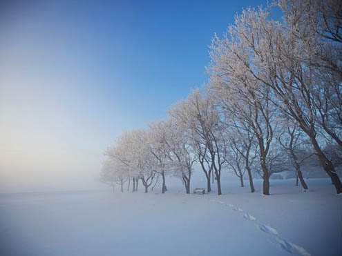 arbres-neige-alberta-canada