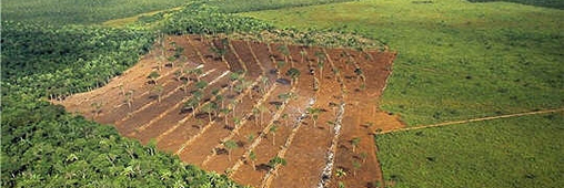 Bonne nouvelle : la déforestation en Amazonie recule