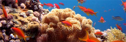 Réchauffement climatique : du courant électrique pour sauver les coraux