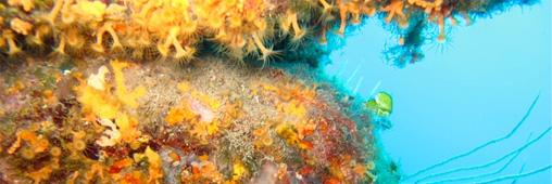 Parc naturel marin du golfe du Lion, la biodiversité protégée