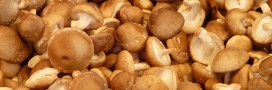 Hiver: les aliments qui boostent votre système immunitaire