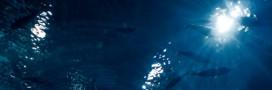Pêche en eaux profondes: quelques distributeurs renoncent