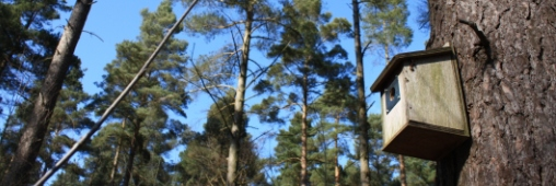 Fête de la Nature 2012 : défi 10 000 nichoirs !