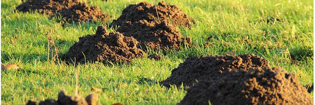 Des engrais naturels pour un jardin tout bio